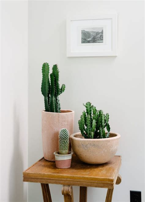 plant home decor 25 best ideas about indoor plant decor on pinterest