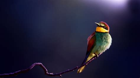 hd wallpapers for desktop birds colorful hd birds wallpapers birds cute birds hd
