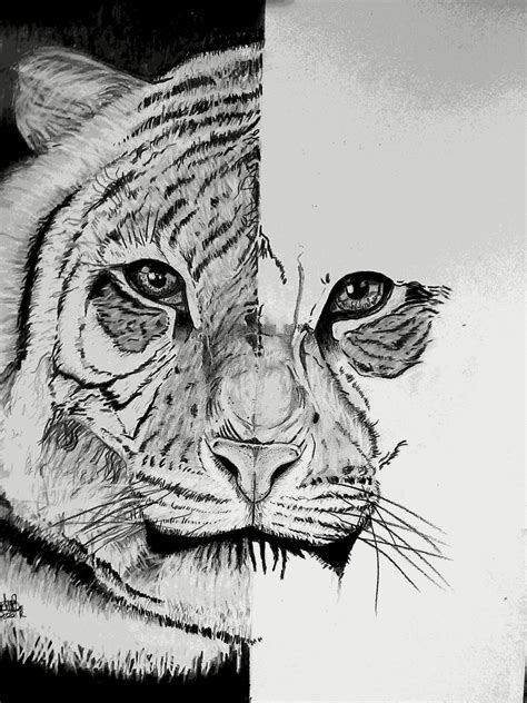 reza fanart design cara menggambar kepala harimau