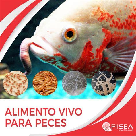 alimento vivo  peces