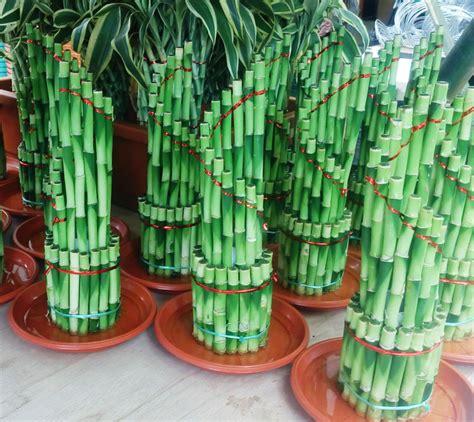 Lu Hias Dari Bambu hidroponik tanaman hias bebeja