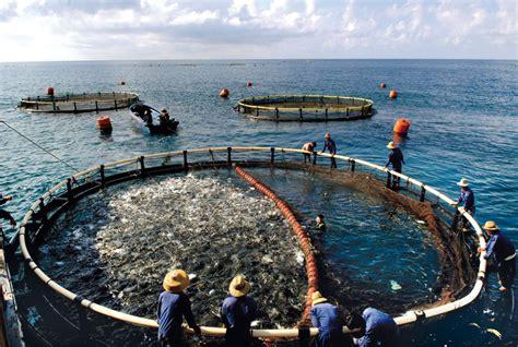 monterey boats net worth stand der meeresfischerei 171 world ocean review