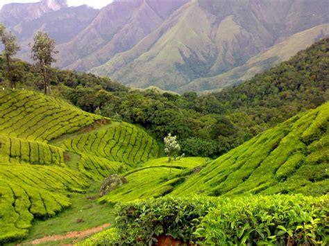 Tea Gardens by Tea Gardens At Munnar Kerala Popular Temples Of India