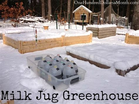 winter greenhouse gardening diy milk jug greenhouse winter sowing one hundred