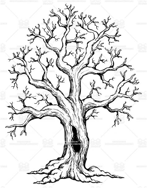 oak tree drawing pinterest the world s catalog of ideas