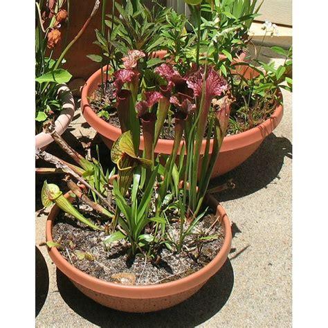 Wide Plant Pot Wholesale Wide Bowl Pots