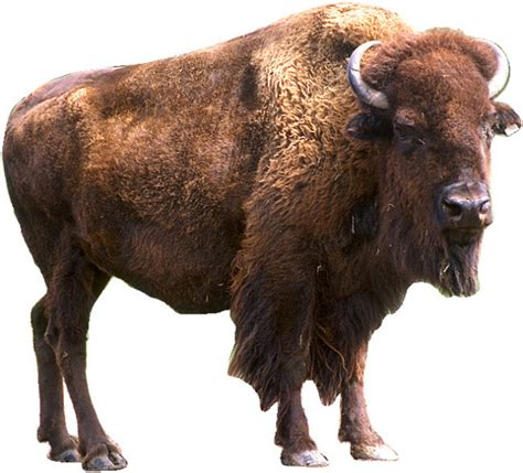 Types Of Home Foundations by Adopt A Bison From World Animal Foundation