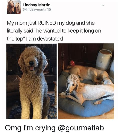 Dog Mom Meme - dog mom meme 28 images 25 best memes about dog mom dog