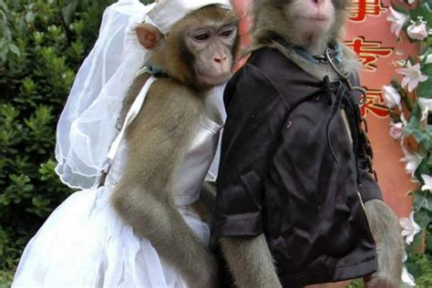 Monkey For Your Wedding by And Animal Weddings Images From Around The
