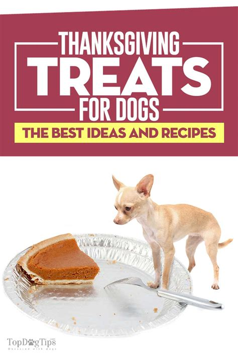 best treats for dogs the 10 best thanksgiving treats for dogs to spoil your