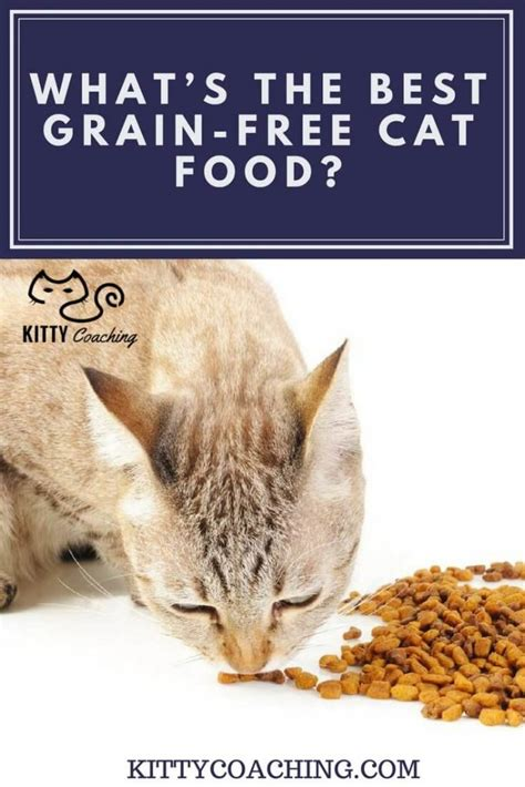best grain free food cat food archives kittycoaching