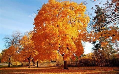 30 Really Beautiful Four Seasons Wallpapers | Multy Shades Fall Nature Wallpaper