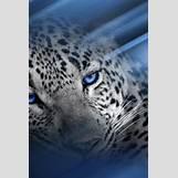 Colorful Leopard Print Pattern | 640 x 960 jpeg 161kB