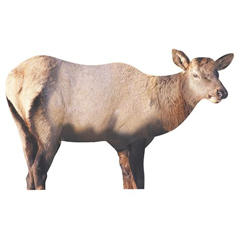 Ts Deers renzo s cow elk decoy 110287 deer big decoys at