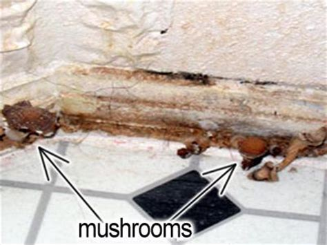 Mushrooms Growing In Bathroom by Controlling Mold In Your Home Paperblog