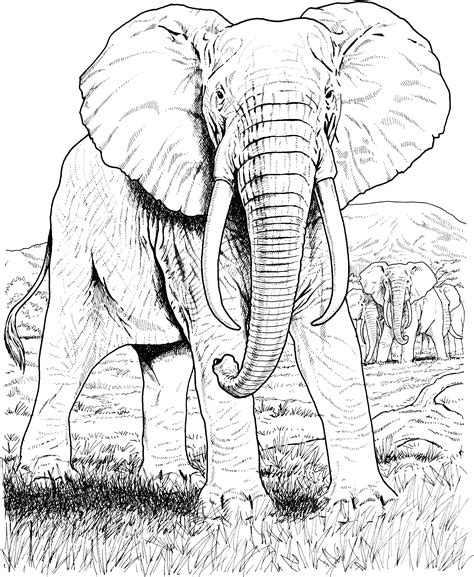 hard coloring pages of elephants free elephant coloring pages