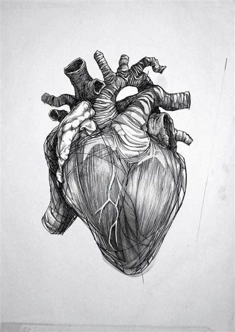 anatomical heart sketch body art pinterest crazy
