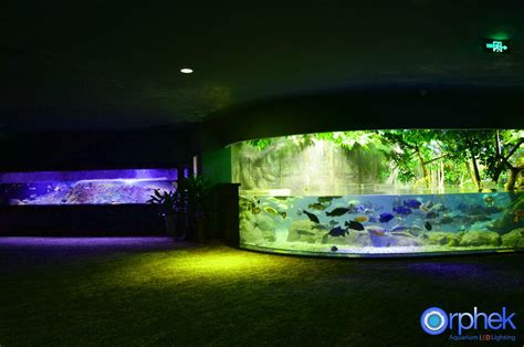 Led Aquarium Lighting led aquarium lighting orphek