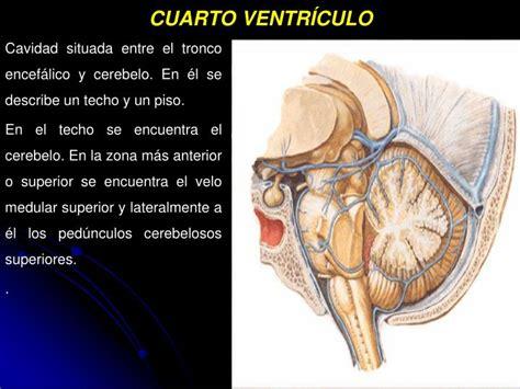 cuarto ventriculo ppt meninges liquido cefalorraqu 205 deo powerpoint