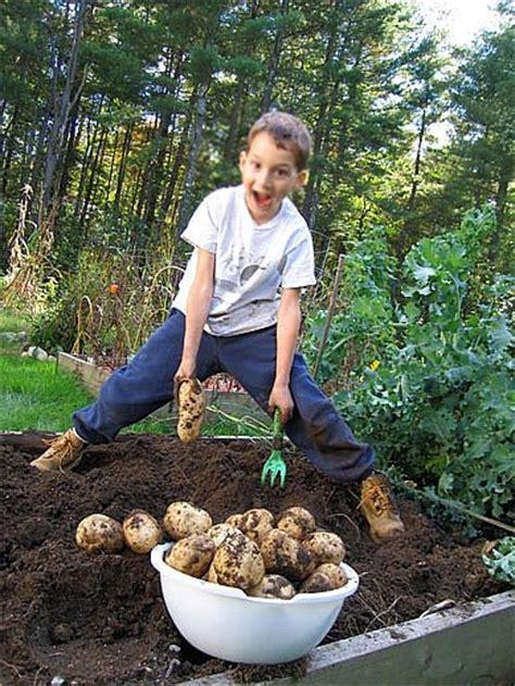 4 vegetables that grow in one week gardening with preschoolers
