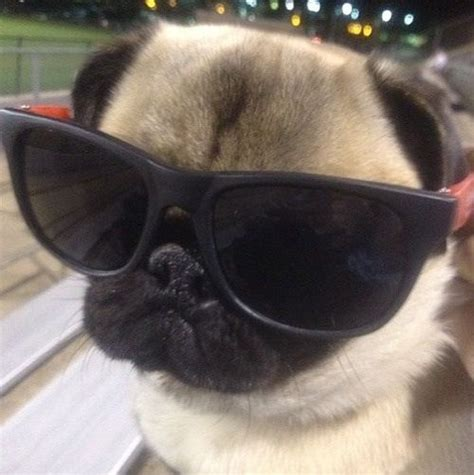pug thug thug pug how is this