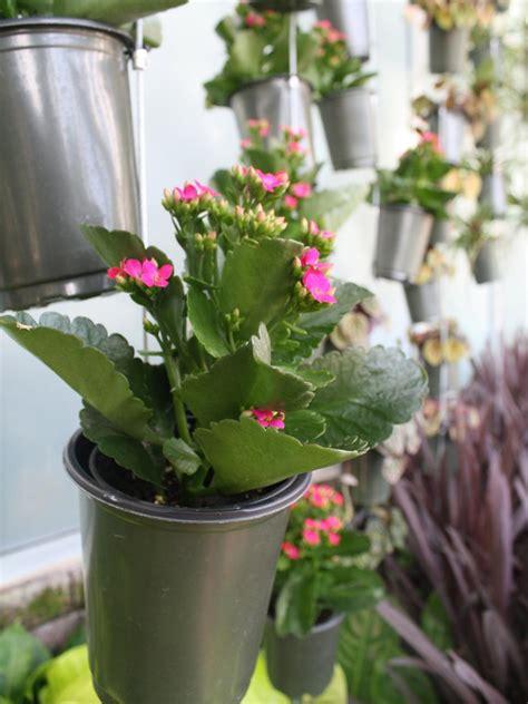 winter flowers  indoor gardens hgtv
