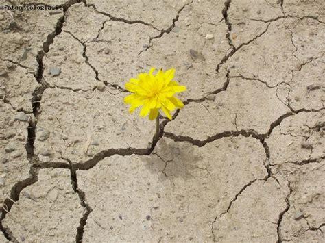 tra e fior nasce l fiore tra le crepe
