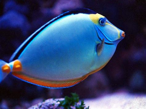 Displaying Images For   Real Tropical Fish Pictures