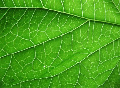 patterns in nature leaves megan vanderpoel october 2012