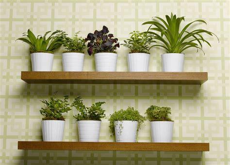 salas pequenas decoradas  plantas