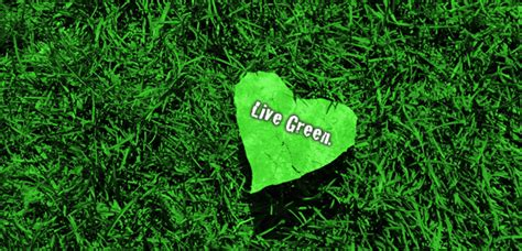 green living principles of green living dorecycling