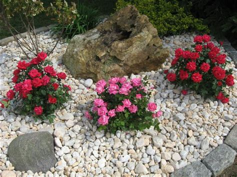 Landscape Pictures With Knockout Roses Decorative Landscape Design