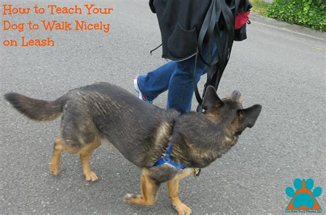 how to your puppy to walk on a leash how to teach your to walk nicely on leash