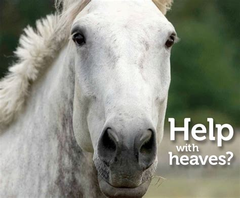 keeps heaving heaves in horses what to do smartpak