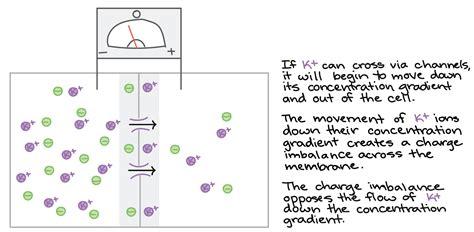 neuroscience ambiguity   relation