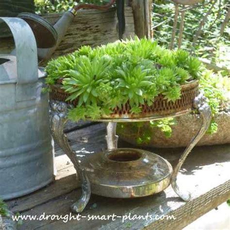 Unique Planters For Succulents | unique succulent planters