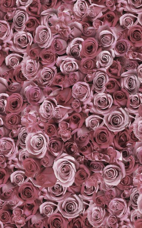 vintage roses beautiful varieties 1910496901 790 best wallpaper images on iphone backgrounds background images and phone backgrounds