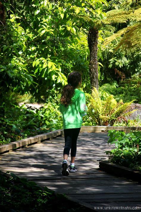 botanical garden sf san francisco botanical garden sundays in my city by