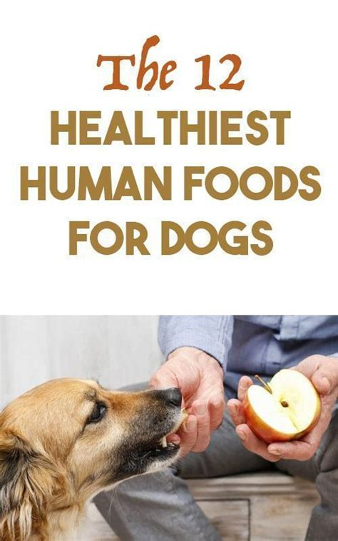 healthy human food for dogs 17 best ideas about human food for dogs on facts about zeus canned