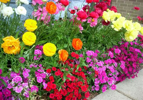summer flowers the most popular blooms for every month best summer annual flowers for texas