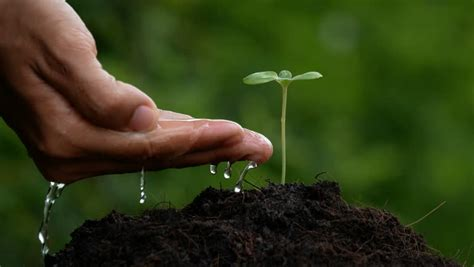 Hidrogel Beautiful Soil Plant a beautiful watering a plant in a and magical atmosphere in