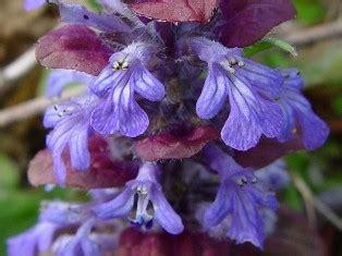 elenco di fiori in ordine alfabetico elenco piante in ordine alfabetico dalla a alla z