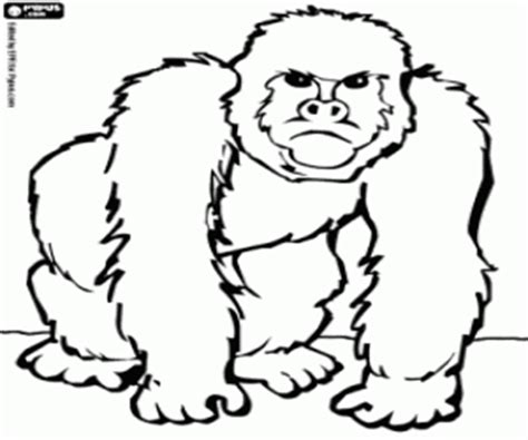 Monkeys coloring pages, Monkeys coloring book, Monkeys