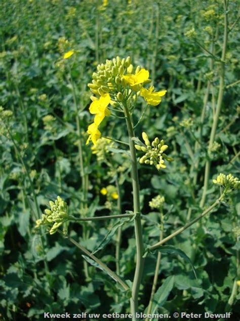 bloemen geel lange steel tuin eetbare bloemen uit de groente kruiden of siertuin