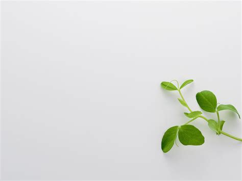 powerpoint design leaf green leaves slide free ppt backgrounds for your