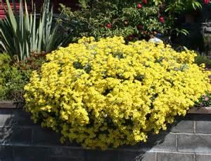 Summer Flowering Shrubs Scottish Artist And His Garden Summer Flowering Shrubs