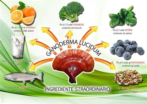 soluzione suprema dove si compra ganoderma lucidum propriet 224 e dove si compra