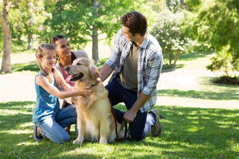puppy social pets can help their humans create friendships find social support harvard health