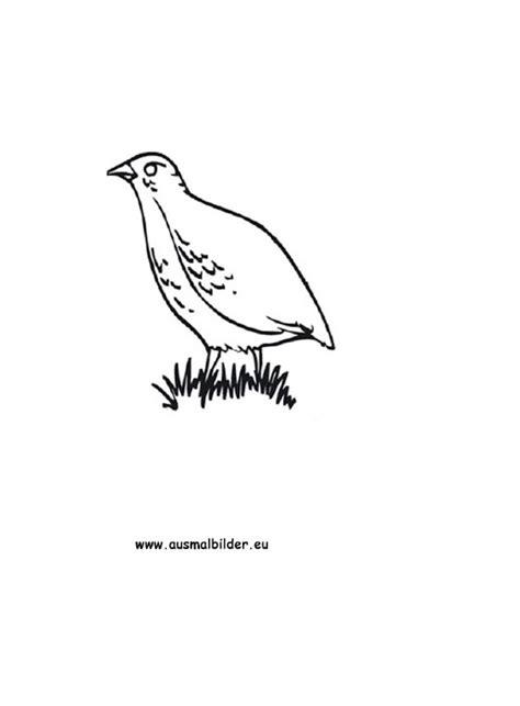 Ausmalbilder Rebhuhn - Rebhühner Malvorlagen