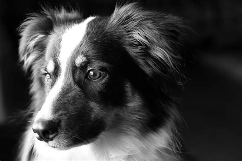 do dogs see in black and white black and white animal photography www pixshark images galleries with a bite